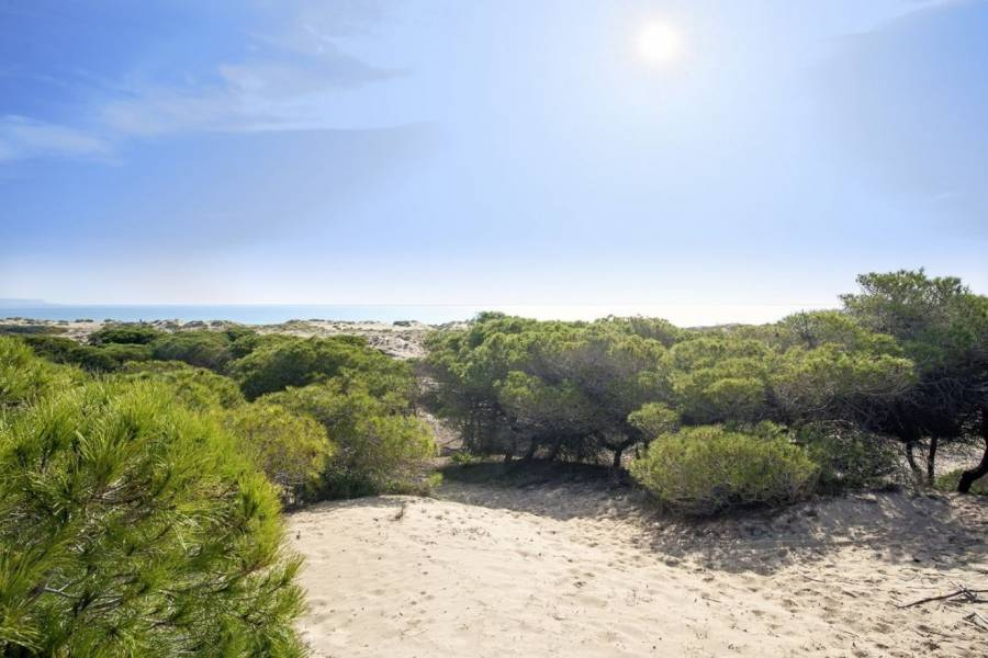 Sale - Ground floor - Natura pinet - La marina